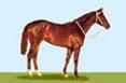fantasy horse game