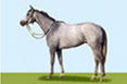 virtual horse racing game